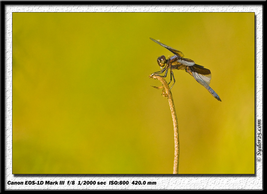 IMAGE: http://sydor25.com/Pictures/Birds_6.5.07-020.jpg