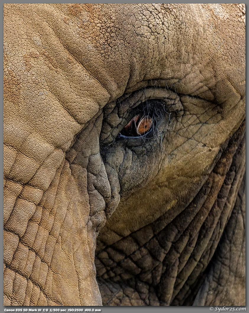IMAGE: http://sydor25.com/Pictures/CPZ_Elephants_03.28.13-06_8x10.jpg