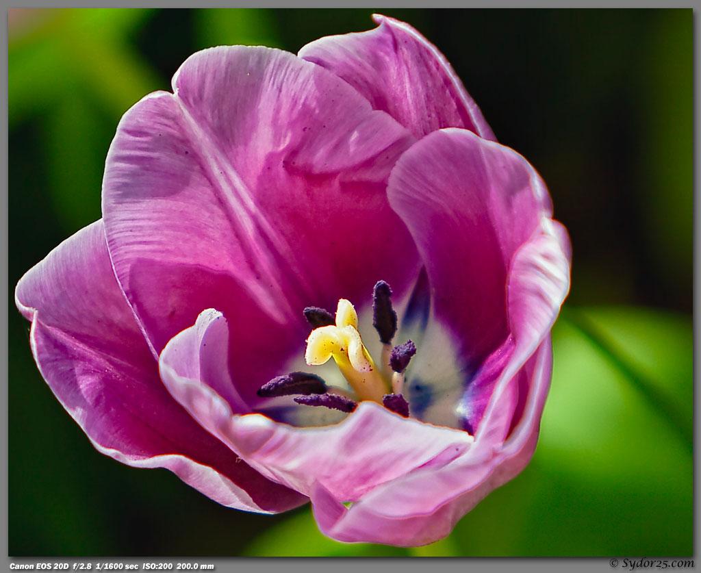 IMAGE: http://sydor25.com/Pictures/Dallas_Arboretum-781_8x10.jpg