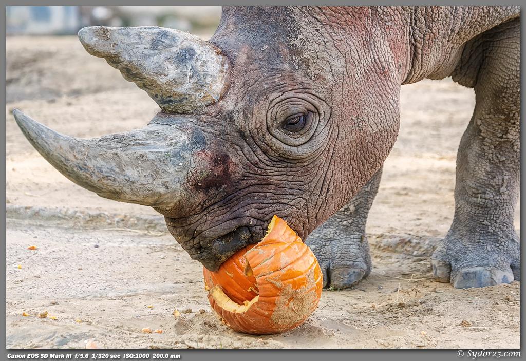 IMAGE: http://sydor25.com/Pictures/Dallas_Zoo_11.03.12-154_12x18.jpg