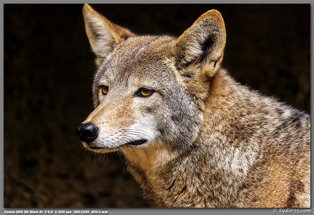 IMAGE: http://sydor25.com/Pictures/FWZ_Animals_11.10.12-118.jpg