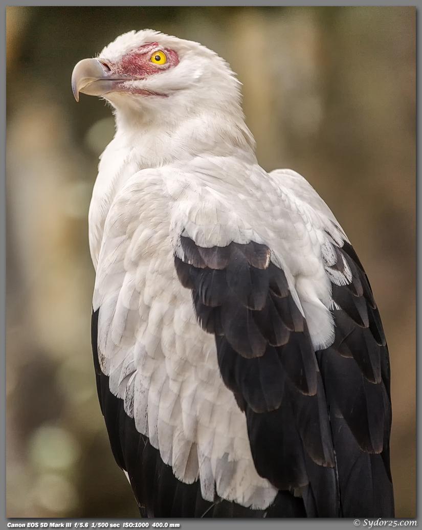 IMAGE: http://sydor25.com/Pictures/FWZ_Birds_11.10.12-073_8x10.jpg