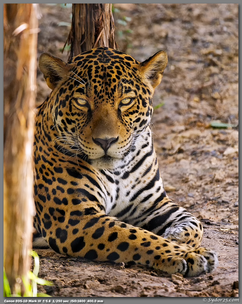 IMAGE: http://sydor25.com/Pictures/FWZ_Jaguars_08.28.12-009_8x10.jpg