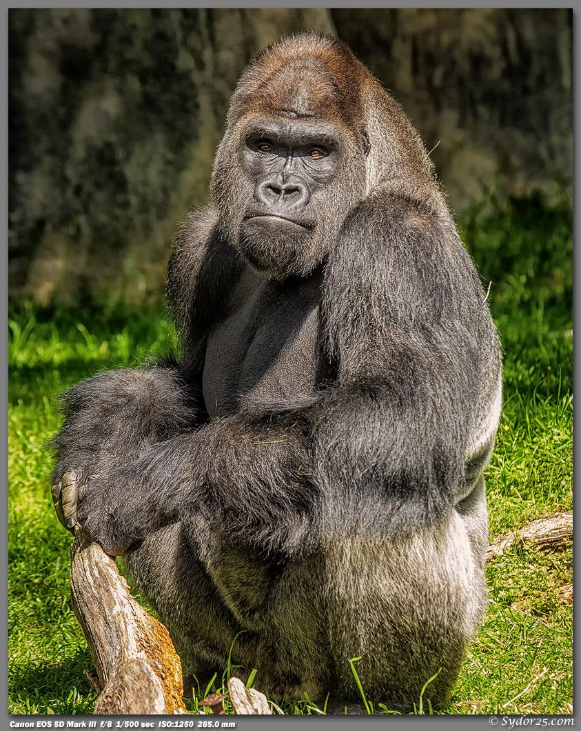 IMAGE: http://sydor25.com/Pictures/FWZ_Primates_04.21.13-057_8x10.jpg