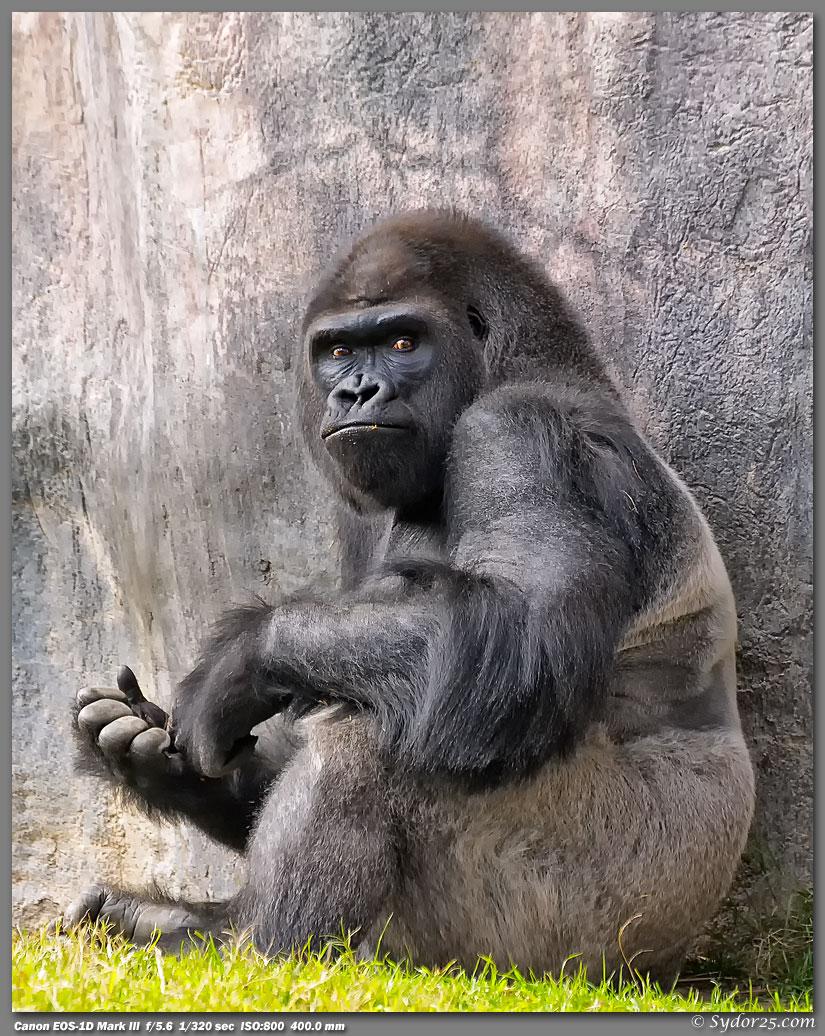 IMAGE: http://sydor25.com/Pictures/FWZ_Primates_1.15.12-024_8x10.jpg