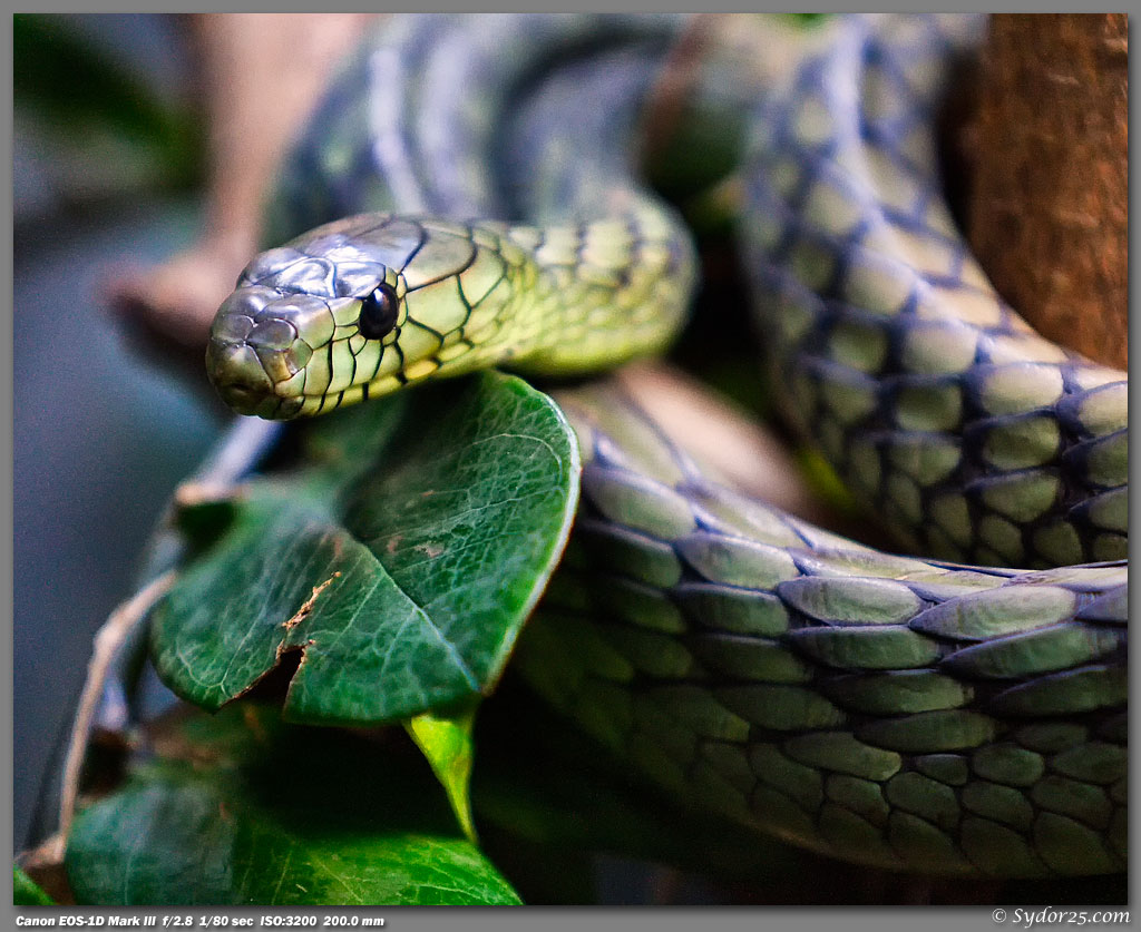 IMAGE: http://sydor25.com/Pictures/FW_Reptiles_2.25.11-036_8x10.jpg