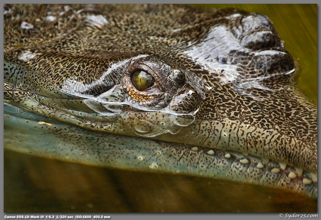IMAGE: http://sydor25.com/Pictures/Fort_Worth_Reptiles-013.jpg