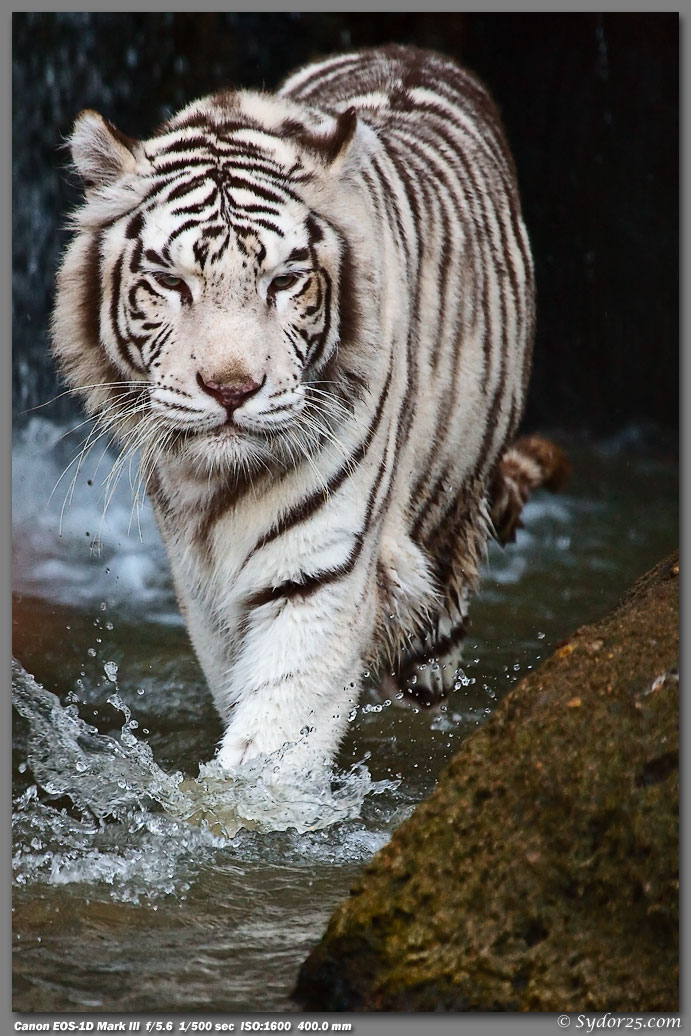 IMAGE: http://sydor25.com/Pictures/Fort_Worth_Tigers-644.jpg