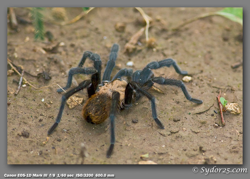 IMAGE: http://sydor25.com/Pictures/Spider_6.5.07-003.jpg